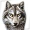 Волки и собаки